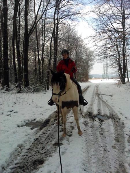 pferde mit allem drum und dran
